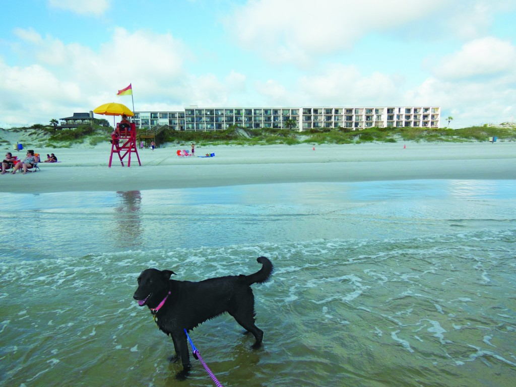 Dog, Daphne, at Daytona Beach