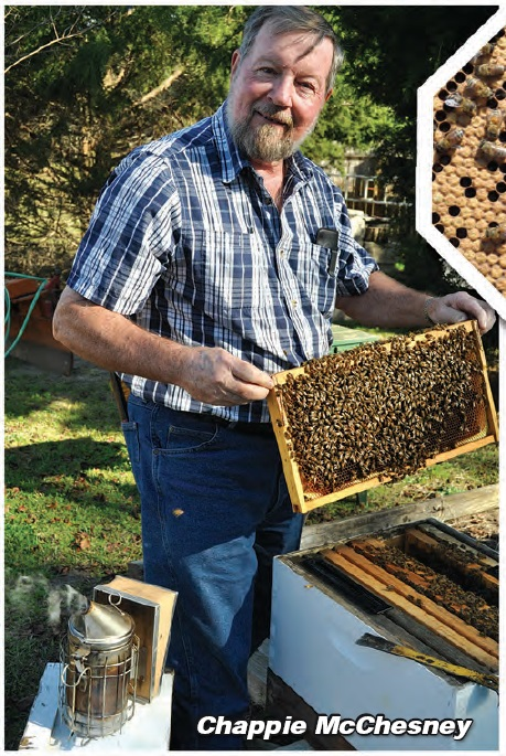Honey Bees . . . in Your Home!