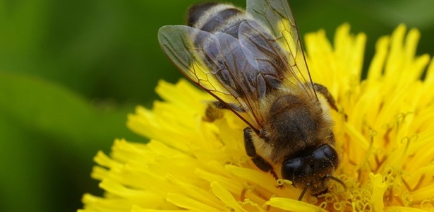 Saving our Honey Bees, One Bee at a Time